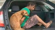 Brasil: lo detienen y su perro sube al coche de policía con él