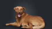 Fiat reemplaza sus autos por perros en adopción