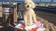 Cómo es el primer balneario canino de Argentina?