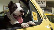 BA Taxi se suma al transporte de perros