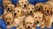 Prohiben venta de cachorros (EEUU) para fomentar adopción