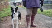 Cuál país registrará el ADN de los perros para multar a sus dueños?